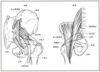 梨状筋の直下を通る坐骨神経